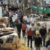 "10 – 13 septembrie 2013 – Salonul International al Cresterii Animalelor ""Space 2013"""