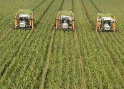 Ministerul Agriculturii estimează că în 2011 va atrage fonduri europene de 1,5 miliarde euro