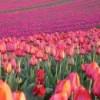 Tabără spune că nu vrea să lege problemele cu florile din Olanda de situaţia Schengen