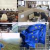 Subiectele zilei – 29 septembrie 2011