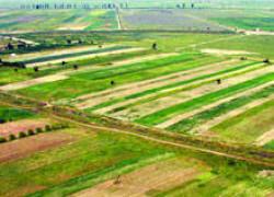 Suprafaţa cultivată cu legume în sistem ecologic a crescut în 2011 cu 29%, la 956 hectare