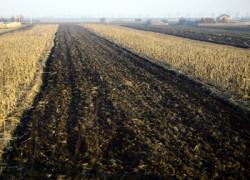Vezi oferta pentru fertilizatori organici şi chimici