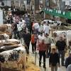Salon pentru crescătorii de animale, în Franţa